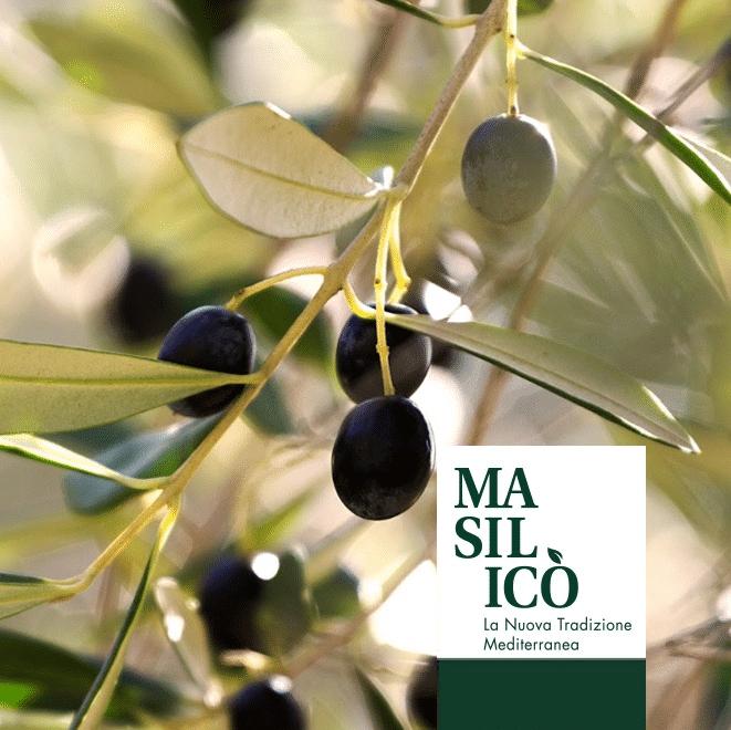 La storia dell'olio di oliva, il nuovo articolo del Blog di Masilicò