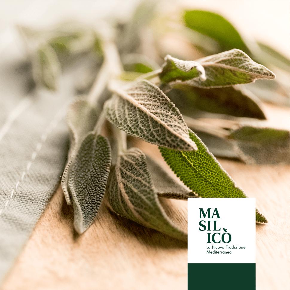 Storia e proprietà della Salvia – Blog Masilicò